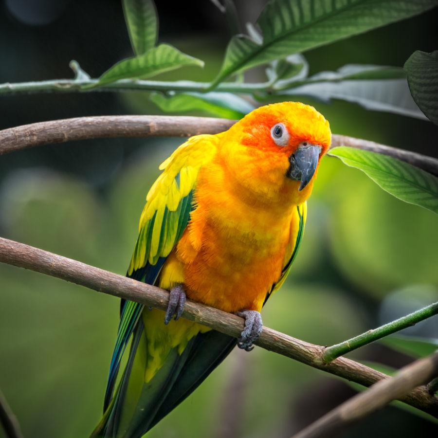 parrot place business plan